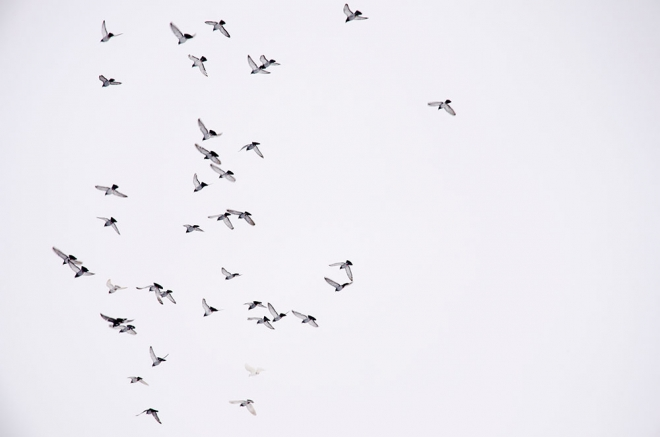 birds flying in niseko