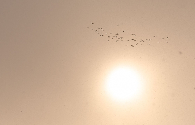 birds flying above the sun